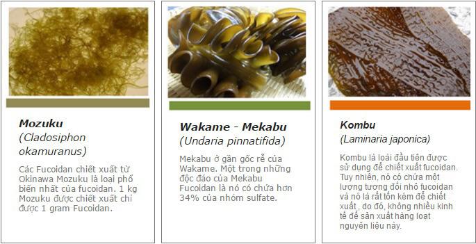 cac-loai-tao-nau-chua-fucoidan-2302